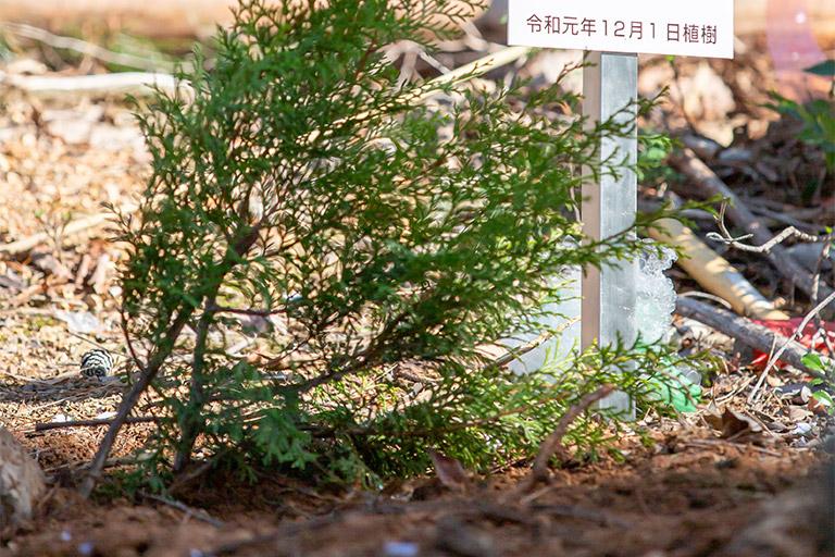 上賀茂神社の桧木里親制度へのご協力